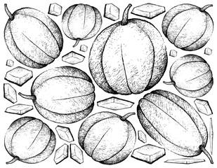 Hand Drawn of Muskmelon Fruit on White Background