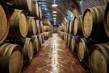 Wine cellar with a row of oak barrels