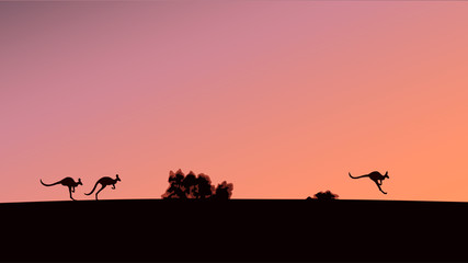 Silhouettes of kangaroos against the background of the evening sky