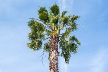 Palm tree with blue sky.