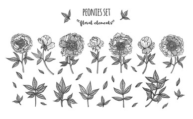 Hand drawn big collections with peonies, buds and leaves. Design elements for wedding invitations, greeting cards, wrapping paper, cosmetics packaging, labels, tags, quotes, blogs, posters etc.