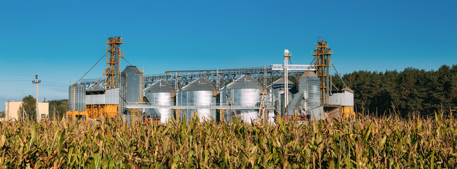 Modern Granary, Grain-drying Complex, Commercial Grain Or Seed Silos In Sunny Summer Rural Landscape.