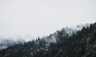 Foggy Mountain Forest Landscape Fototapete
