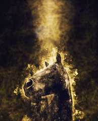Horse head with fire background