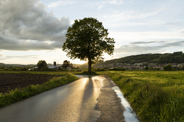 Wall Mural - Sunbeams are reflected in the wet street after a strong thunderstorm in Switzerland