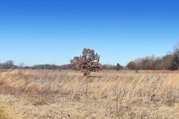 Small Tree in OPen Field