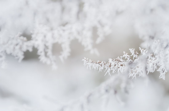 Winter tree frozen branches
