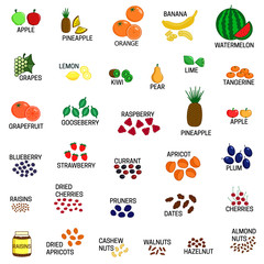 Set of different kinds of fruit, dried fruits and nuts vector colored illustration