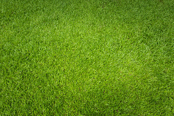 Tuinposter Gras Green grass background and textured, Top view and detail of turf floor at soccer field