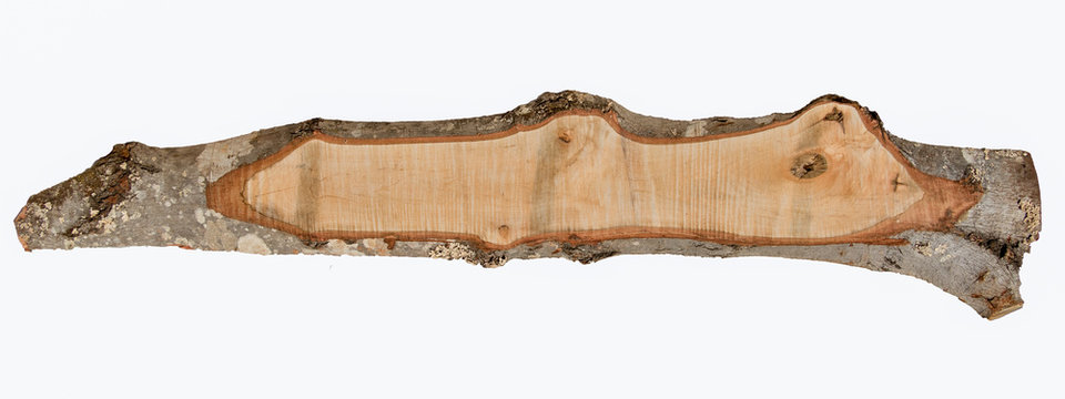 Isolated rough sawn red maple board with bark edge