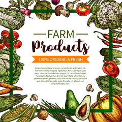Vector sketch poster of farm organic vegetables