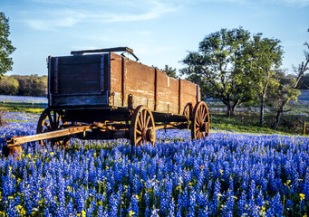 Papiers peints Texas texas hill country