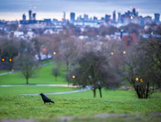 Morning at Primrose hill, London