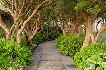 Scene From the Dallas Arboretum