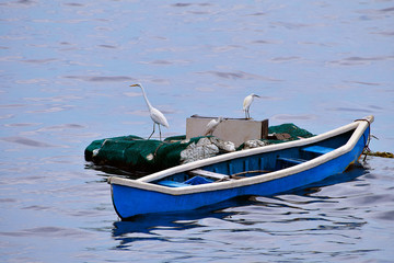 Cattle egrets on boat, Mumbai