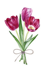 Hand drawn watercolor a bouquet of tulips on white background