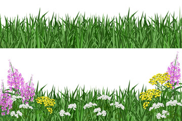 Green grass and summer flowers. Hand drawn vector illustrations on white background for banner design.