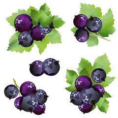 Black currant berries. Set of hand drawn vector illustrations of sprigs of blackcurrant with bunch of berries and green leaves on white background.
