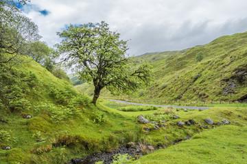 Amazing scottish landscape with lone tree