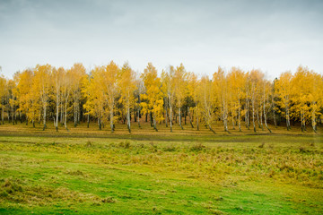 Autumn landscape - yellow trees.