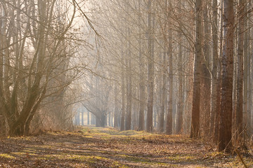 Misty Autumn forest. Late Autumn with sunshine
