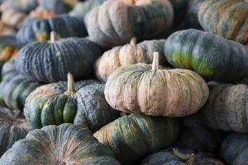 green pumpkin in a market