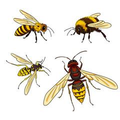 Bee, wasp, bumblebee, hornet - vector illustration