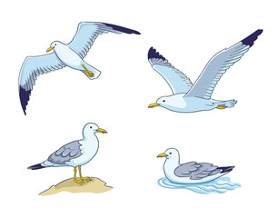 Seagulls - vector illustration
