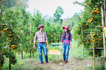 Portrait of happy farmer couple harvesting oranges in an orange tree field