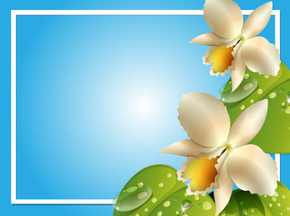 Border template with white orchids