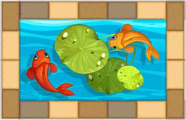 Two fish swimming in small pool