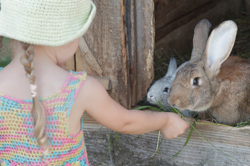 Farmer girl feeding cute domestic rabbits with grass outdoors