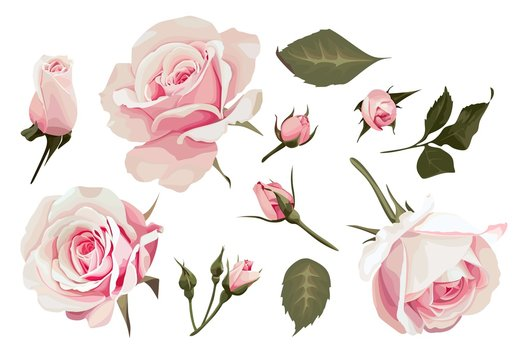 Realistic Roses Vector Clip Art set of 11 elements Pink Flower image