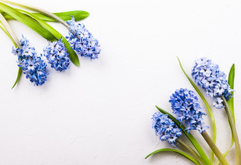Lilac hyacinths on white background