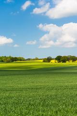 Spoed Fotobehang Blauw Grain field in the spring - 0732