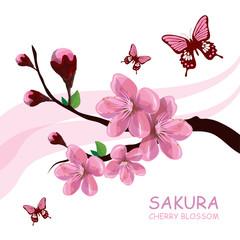 Blossom cherry tree. Traditional Japanese Sakura. Cherry blossom. Pink sakura flowers.