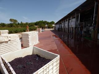 Bodegas vino en el  Algarve ,Portugal