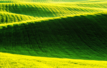 spring field. picturesque hilly field. agricultural field in spring