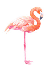 Flamingo illustration painted with watercolors isolated on white background.