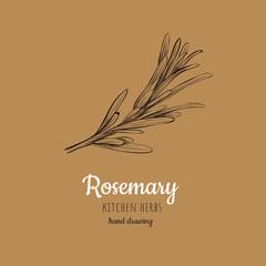 Rosemary vector illustration.