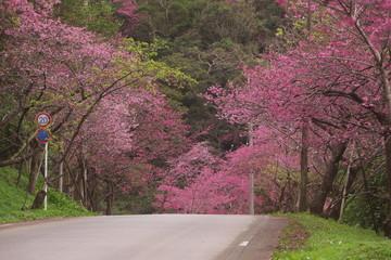 坂の上の桜並木