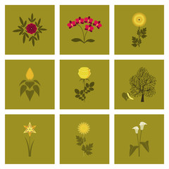 assembly flat Illustrations flower paeonia chrysanthemum orhidaceae rosa calla aster narcissus linden