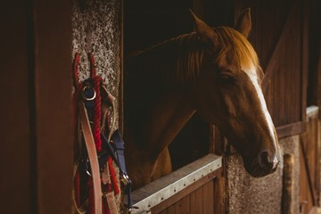 Horse in stable of equestrian centre  Papier Peint