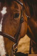Close up view of horse