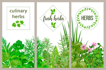 Farm fresh cooking herbs. Set of culinary cards. Greenery, basil, vector icon, Hydroponik