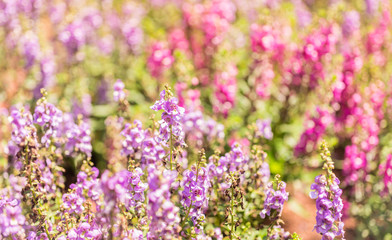 Close up flower background. Ramat HaNadiv Park Rothschild