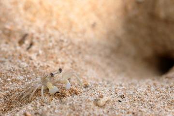 Geisterkrabben am Strand von Koggala in Sri Lanka