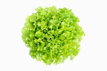 fresh green salad lettuce vegetable isolated on white background