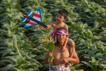 Father with son at the tobacco garden.tobacco plant in garden of thailand.