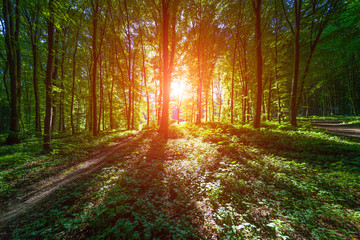 nature green wood sunlight backgrounds